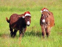 Burro de los animales de la Navidad que come la hierba en el sombrero de santa Fotografía de archivo libre de regalías