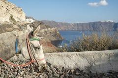 Burro de Santorini Imagen de archivo