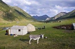 Burro delante del yurt en Kirguistán Foto de archivo
