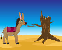Burro in desert Royalty Free Stock Images