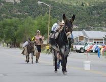 Burro die in de Bergen rennen royalty-vrije stock afbeelding