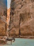 Burro en barranco del Petra Foto de archivo