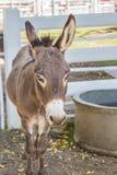 burro en el parque zoológico Fotografía de archivo libre de regalías