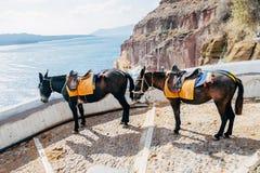 Burro en el puerto de Fira en Santorini Imagenes de archivo