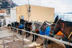 Burro en el puerto de Fira en Santorini Foto de archivo libre de regalías