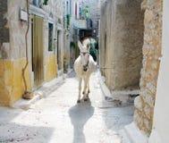 Burro en la aldea griega Fotos de archivo libres de regalías