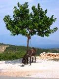 Burro en la colina Imagen de archivo libre de regalías
