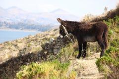 Burro en la isla de Taquile foto de archivo