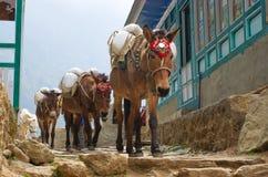 Burro en montañas en el pueblo, Nepal Imágenes de archivo libres de regalías