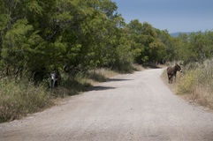 Burro en reserva de naturaleza en Skala Kalloni Lesvos Grecia Fotografía de archivo