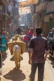 Burro en una calle lateral en Jodhpur Foto de archivo libre de regalías