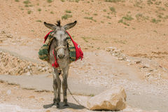Burro Stock Photos