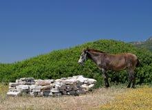 Burro que se coloca en un campo al lado de una playa en España Foto de archivo
