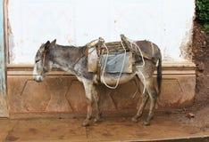 Burro on a Sidewalk in Peru Royalty Free Stock Image