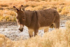 Burro standing in the sun Stock Photos