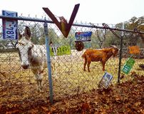 Burro y cabra Fotografía de archivo libre de regalías