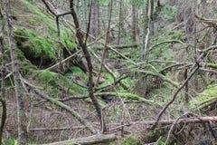Burrone della foresta fotografie stock libere da diritti