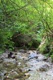 Burrone di Kysel nel parco nazionale slovacco di paradiso, Slovacchia Fotografia Stock Libera da Diritti