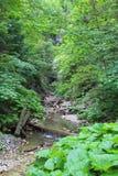 Burrone di Kysel nel parco nazionale slovacco di paradiso, Slovacchia Immagini Stock Libere da Diritti