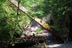 Burrone di Kysel nel parco nazionale slovacco di paradiso, Slovacchia Immagine Stock Libera da Diritti