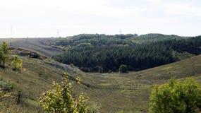 Burrone, raggiungente giù, resti nella foresta fotografie stock libere da diritti