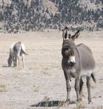Burros blisko South Park Fotografia Royalty Free