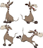 Burros. Cartoon. Set of lovely and ridiculous burros Stock Photo