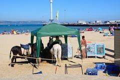 Burros en la playa de Weymouth imagenes de archivo