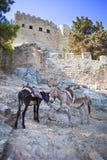Burros en Lindos en la isla de Rhodos, Grecia Foto de archivo