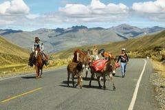 Burros y caballos en el centro en el camino de la manera a Huanuco, Perú foto de archivo