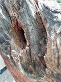 Burrow. A burrow on the dead wood stock photo
