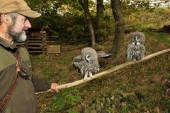Burrowing owls,Athene cunicularia. Stock Photos