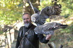 Burrowing owls,Athene cunicularia. Stock Photo