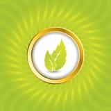 Burst bio green with button Stock Photos