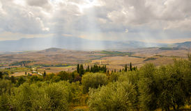 A burst of sunshine over the rolling hills of Tuscany. Rows of green and deep rust colored trees and fields lie in layered forms in Tuscany, Italy among olive Stock Photography