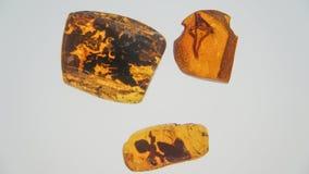 bursztynu kamień Autentyczny Bałtycki bursztyn z prehistorycznym skamieniałym insektem makro- Powiększać - szklany i wzrastający  zdjęcie royalty free