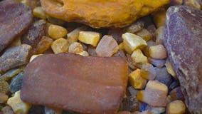 bursztynu kamień Autentyczny Bałtycki bursztyn z prehistorycznym skamieniałym insektem makro- Powiększać - szklany i wzrastający  zdjęcie stock