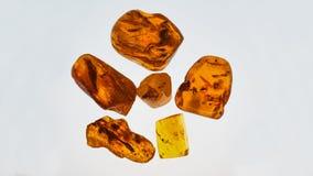 bursztynu kamień Autentyczny Bałtycki bursztyn z prehistorycznym skamieniałym insektem makro- Powiększać - szklany i wzrastający  zdjęcia stock