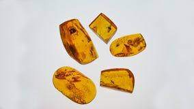 bursztynu kamień Autentyczny Bałtycki bursztyn z prehistorycznym skamieniałym insektem makro- Powiększać - szklany i wzrastający  obraz stock