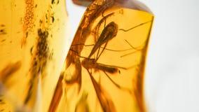 bursztynu kamień Autentyczny Bałtycki bursztyn z prehistorycznym skamieniałym insektem makro- Powiększać - szklany i wzrastający  obraz royalty free