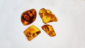 bursztynu kamień Autentyczny Bałtycki bursztyn z prehistorycznym skamieniałym insektem makro- Powiększać - szklany i wzrastający  zdjęcia royalty free