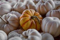 Burt`s Pumpkin Farm. In North Georgia rings in the fall season with all kinds of pumpkins Stock Photo