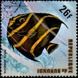 BURUNDI - CIRCA 1974: postage stamp, printed in Burundi, shows a. BURUNDI - CIRCA 1974: a postage stamp, printed in Burundi, shows a fish Gray Angelfish royalty free stock images