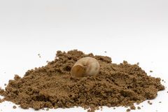 Bury. Snail shell buried in a sand pile Stock Photo