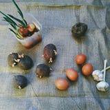 Buryak, garlic, onion, potato vegetables and chicken eggs Royalty Free Stock Image