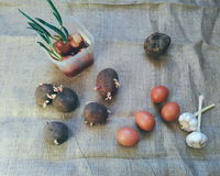 Buryak, garlic, onion, potato vegetables and chicken eggs Stock Image
