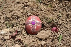 Burying the Old Easter egg in the first furrow of the earth, field. Old Slavic pagan fertility ceremony royalty free stock images