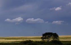 Burz chmur prerii niebo fotografia stock