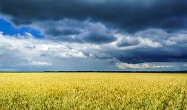 Burz chmury nad złotym polem Zdjęcie Royalty Free