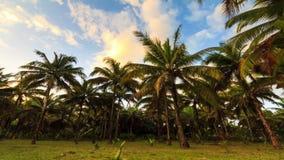Burz palm timelapse zbiory